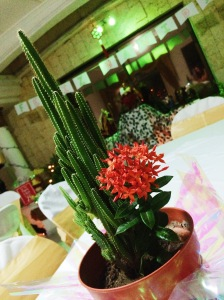 Santa Marta is low key a desert. So my version of a Christmas Tree centerpiece was a cactus. I regret nothing.